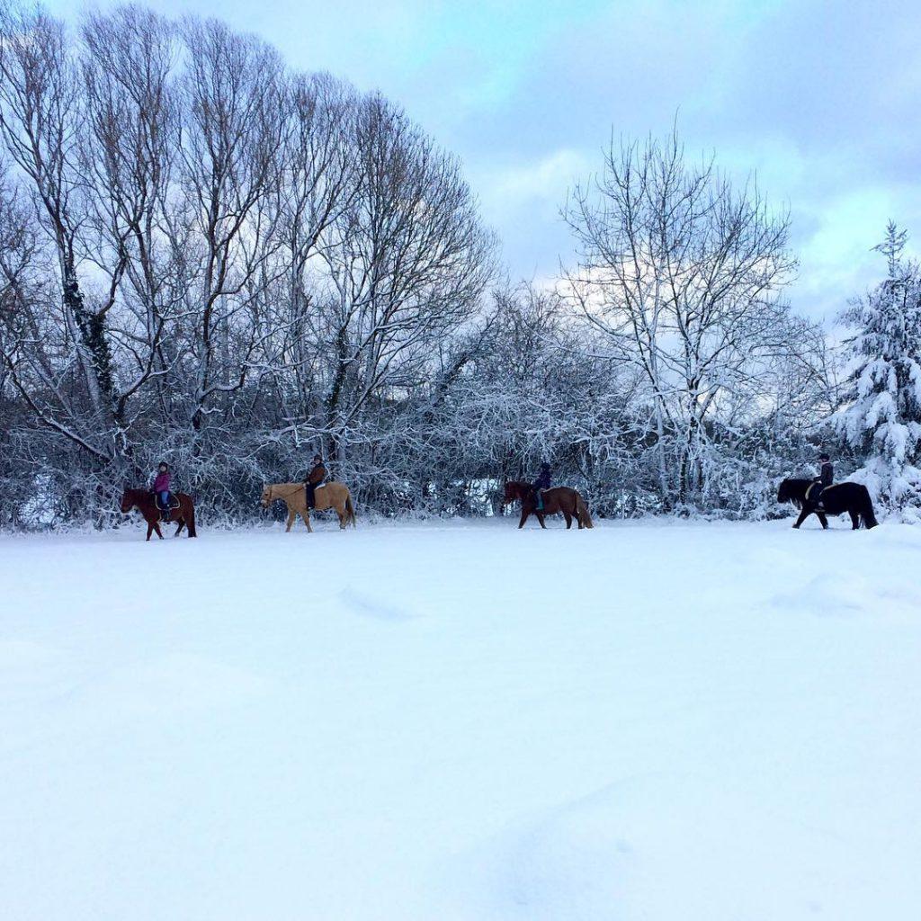 Snow finally! My pony club class today ponyliebe ridingclub Weiterlesen