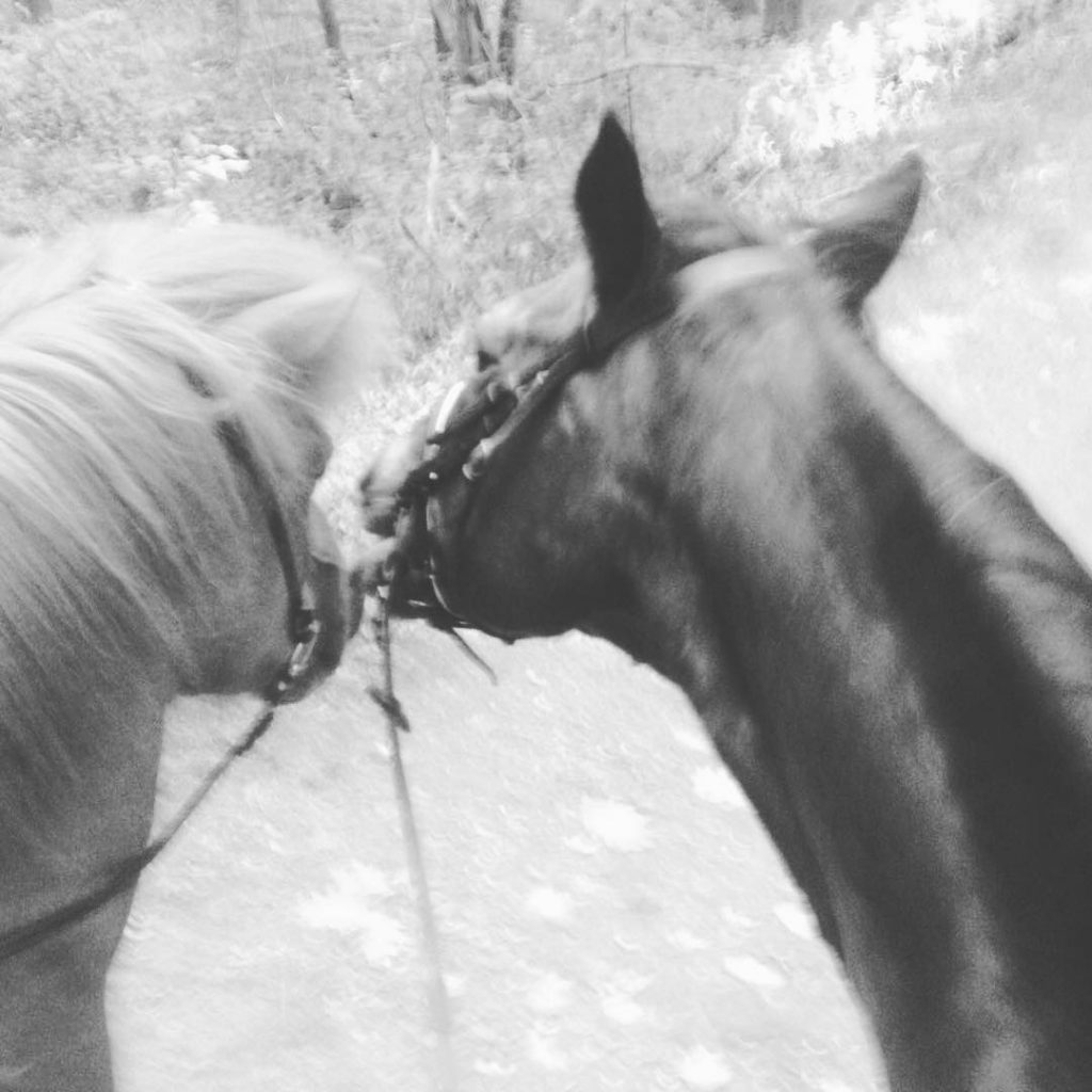 I received this message by my horse! Saying I amhellip