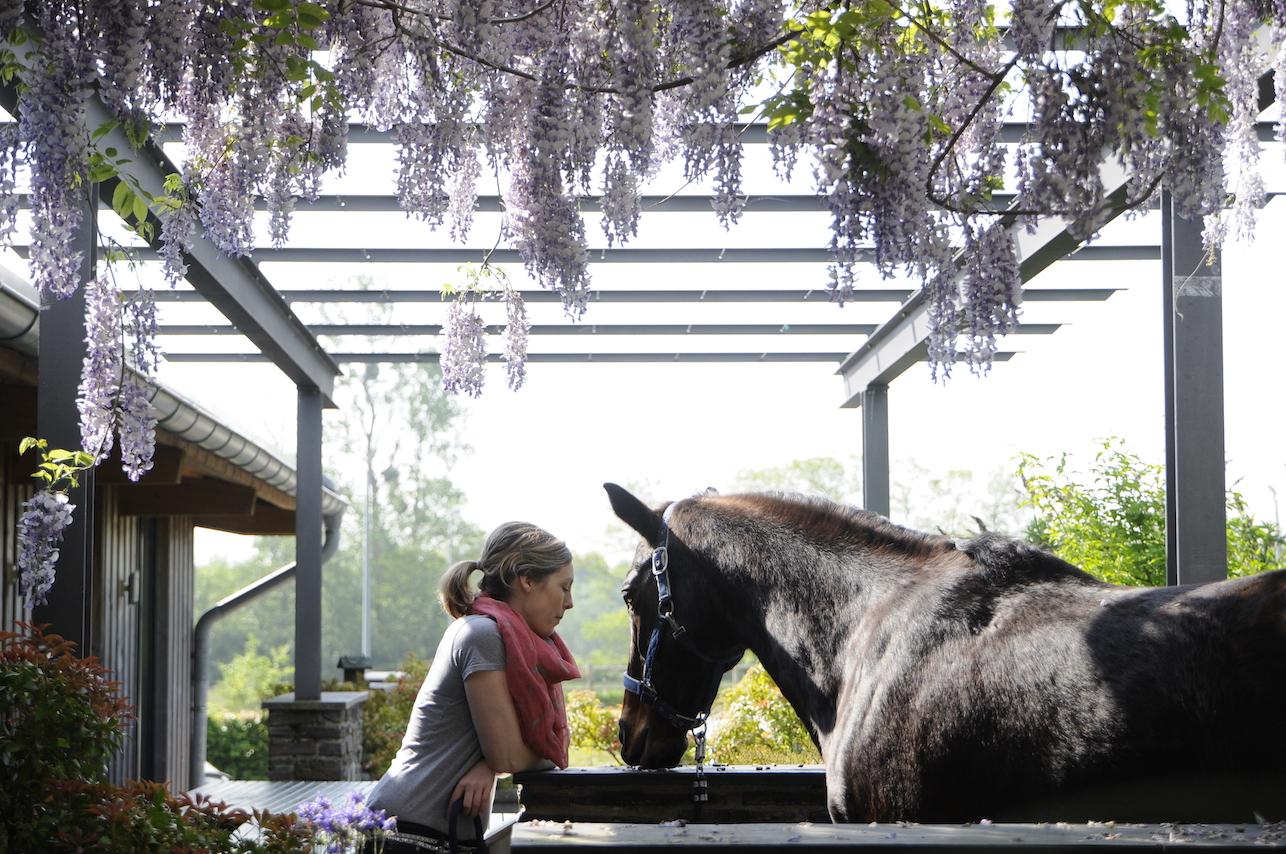 A life with horses_juni_A life with horses_juni__DSC7617 Kopie