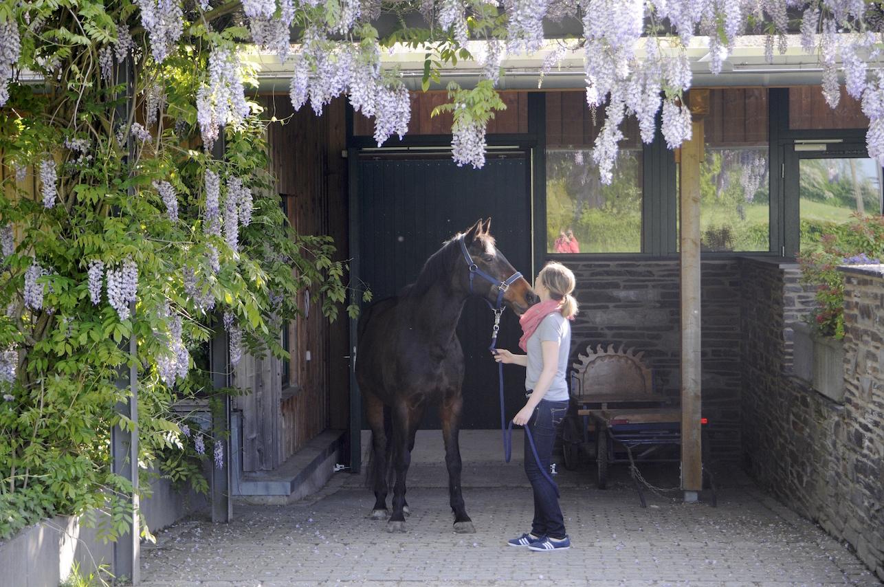 _A life with horses_juni_DSC7486 Klein