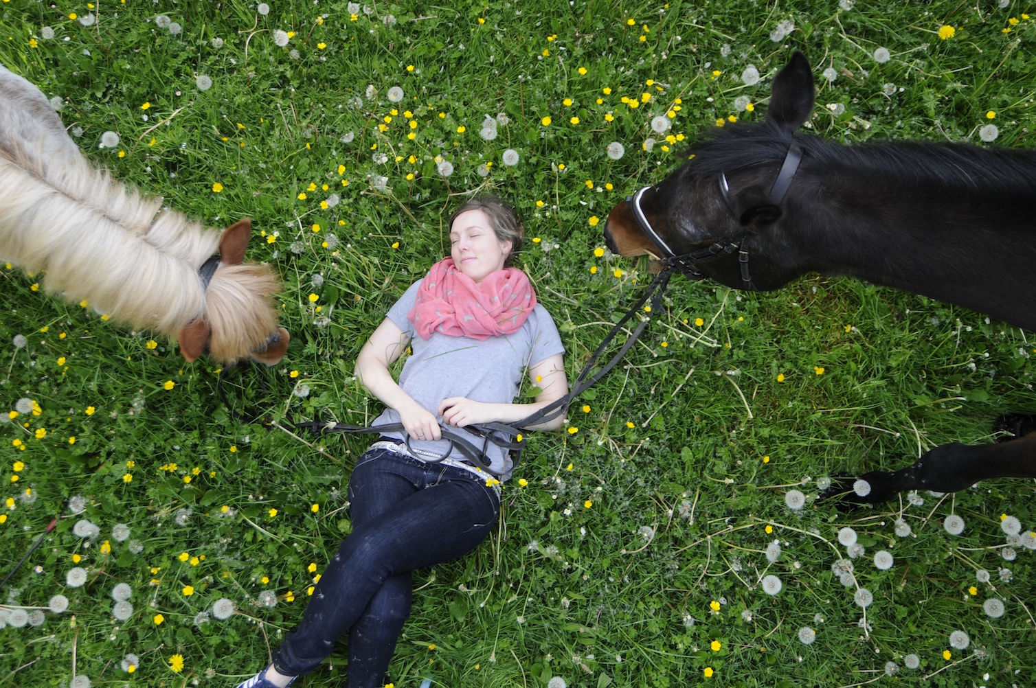 wiese_a_life_with_horses