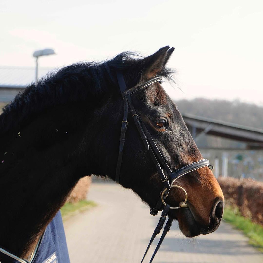 Portraitfoto Pferd