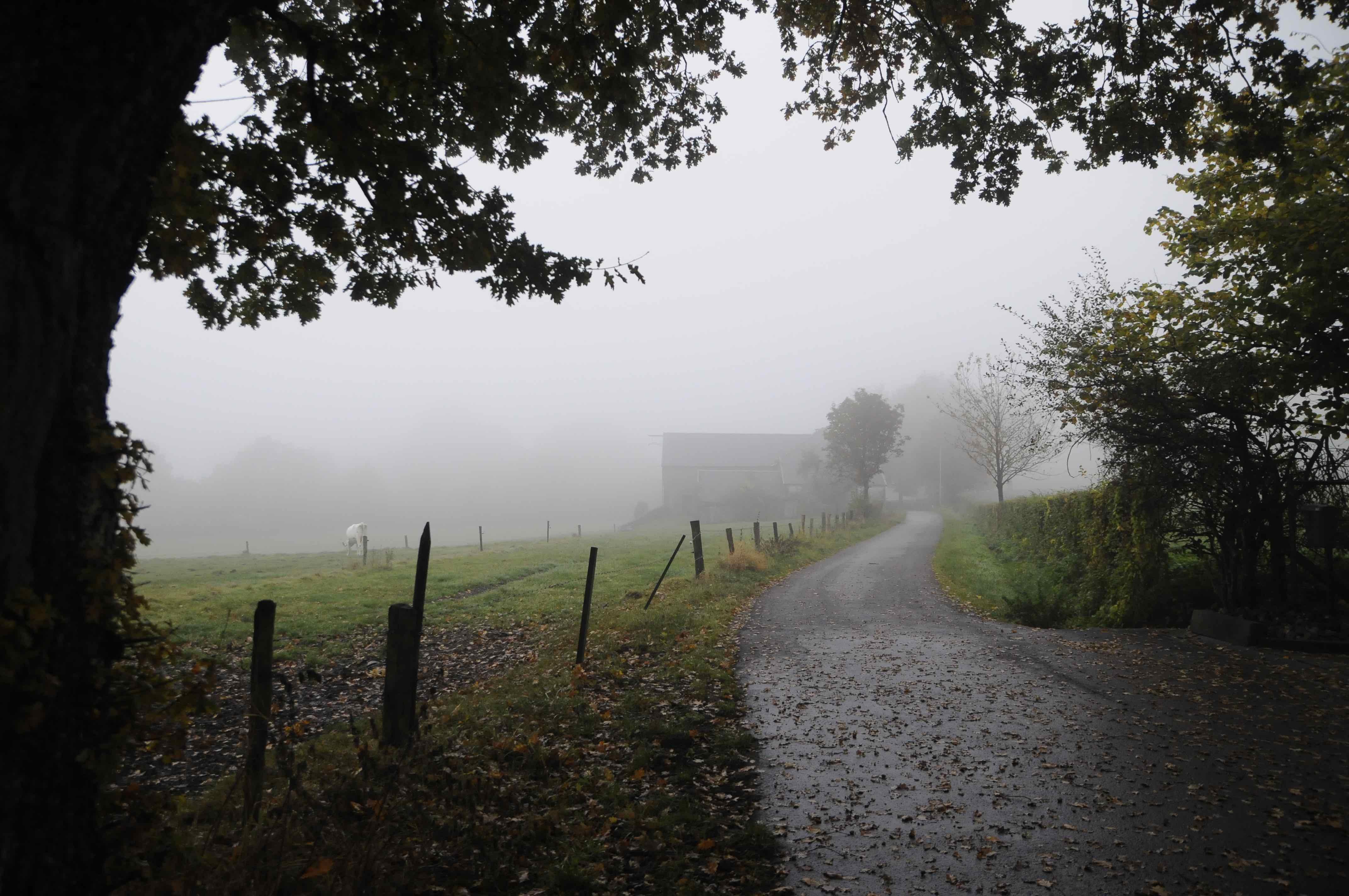 Weg, Nebel, Herbst, Motivationsloch
