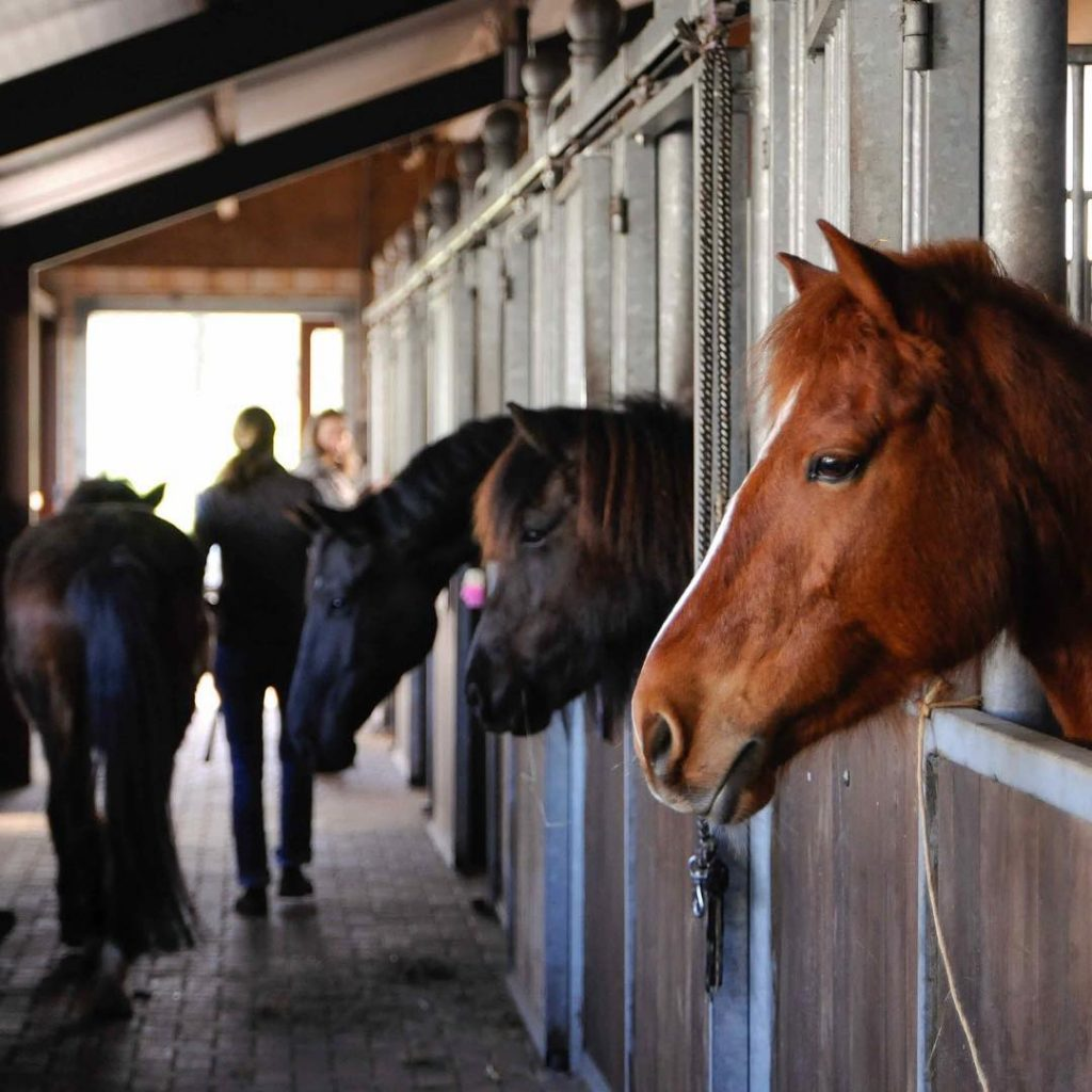 Recently at our barn Waiting to continue the dressage clinichellip