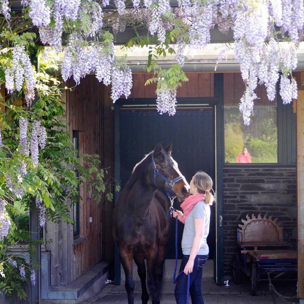 The one equestrian feeistdiebeste Weiterlesen