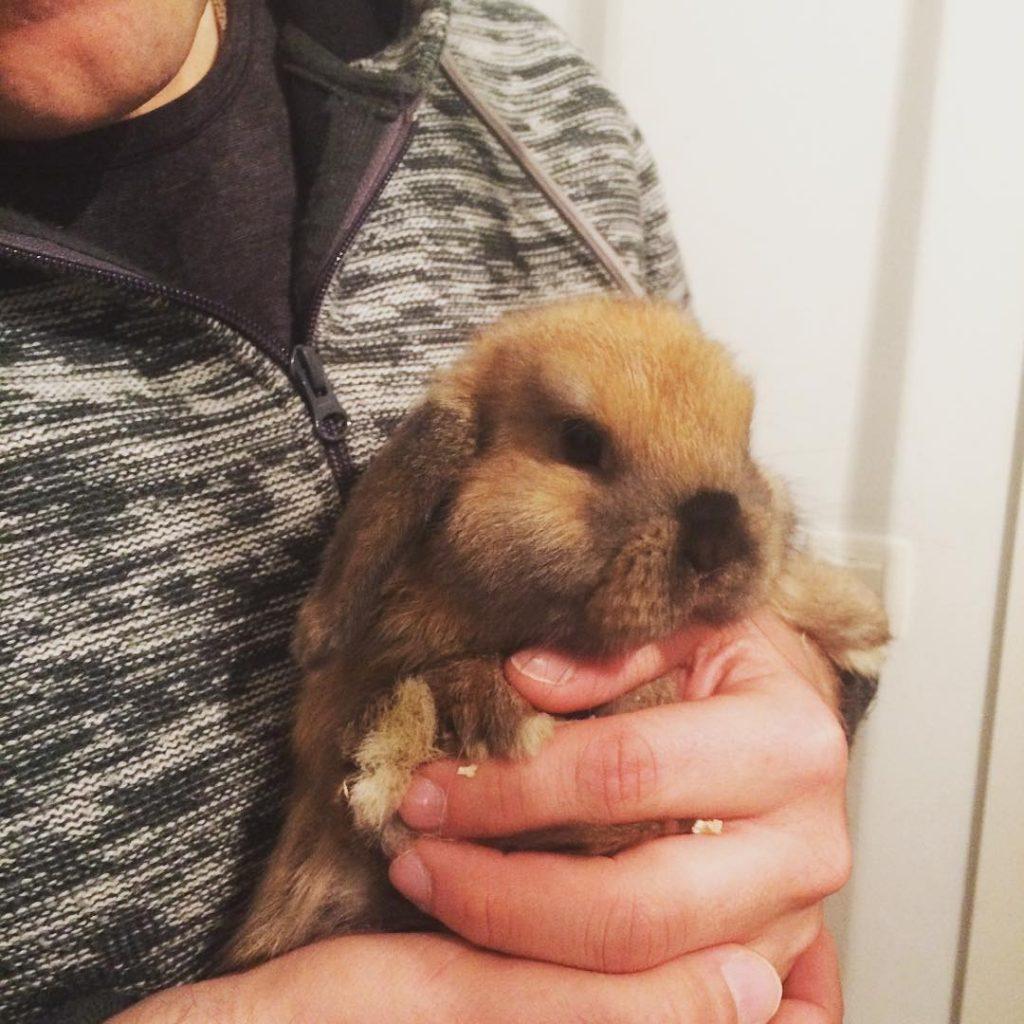 New family member Lotta supercute serfratz rabbit widderkaninchen florisnewfriend Weiterlesen
