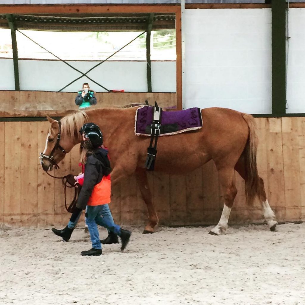 News from the Pony Turning the dressage broodmare into ahellip