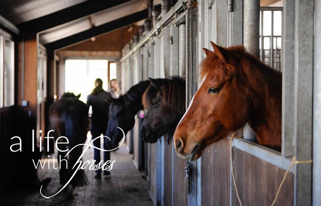 Pferdeköpfe schauen aus Boxen auf die Stallgasse.