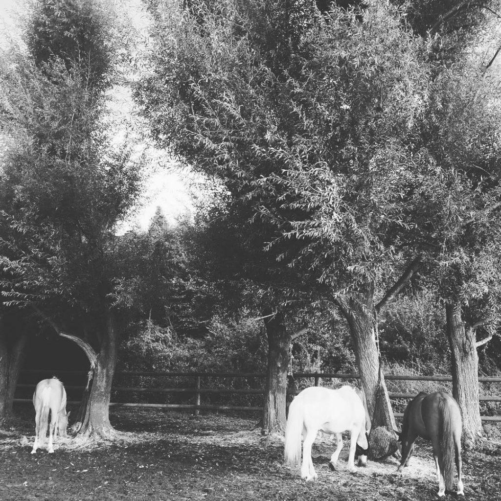 Ponyidylle Manchmal ist die Welt ein Ponyhof Und dann machthellip