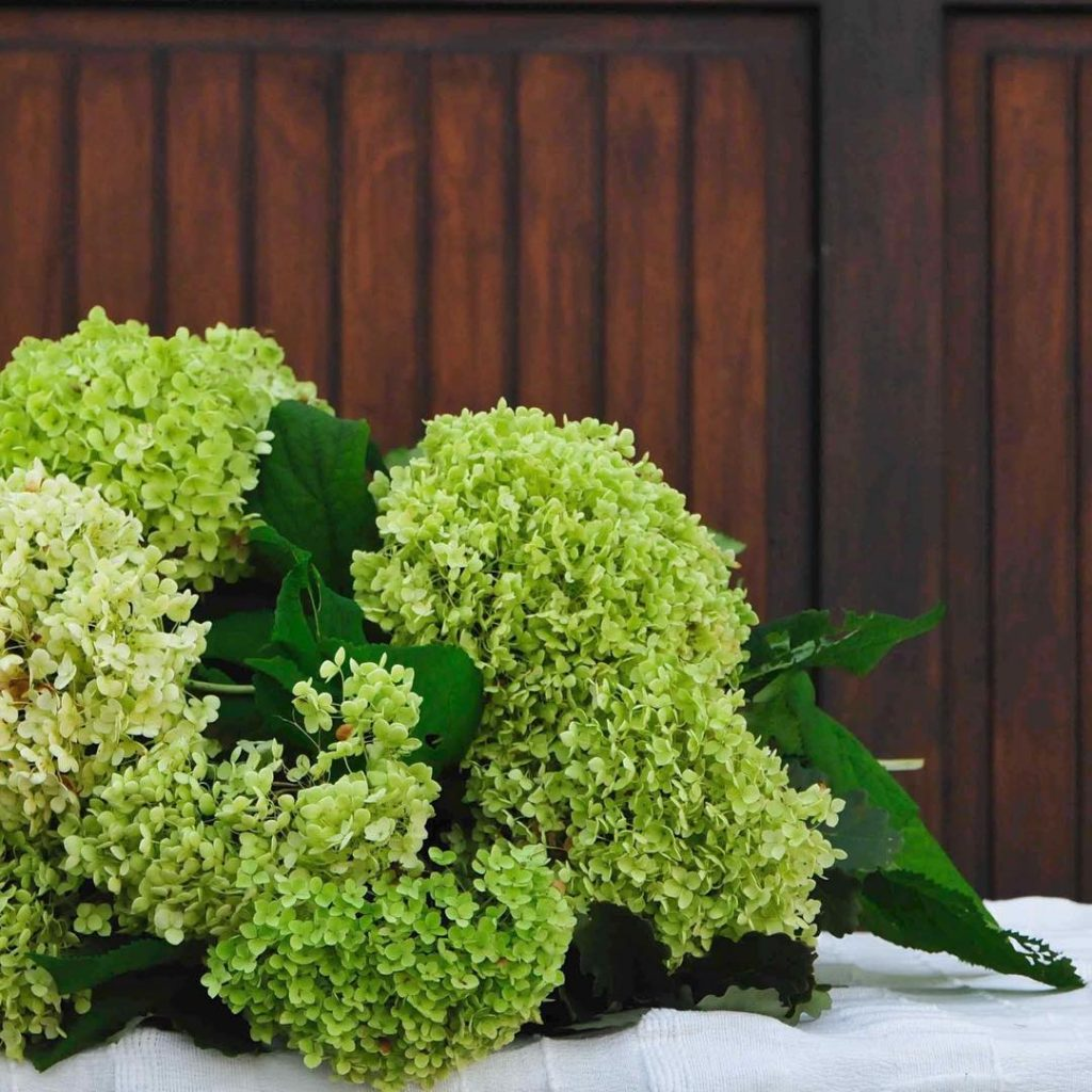 Heute gibts Blumen auf dem Blog dazu die schnsten Bilderhellip