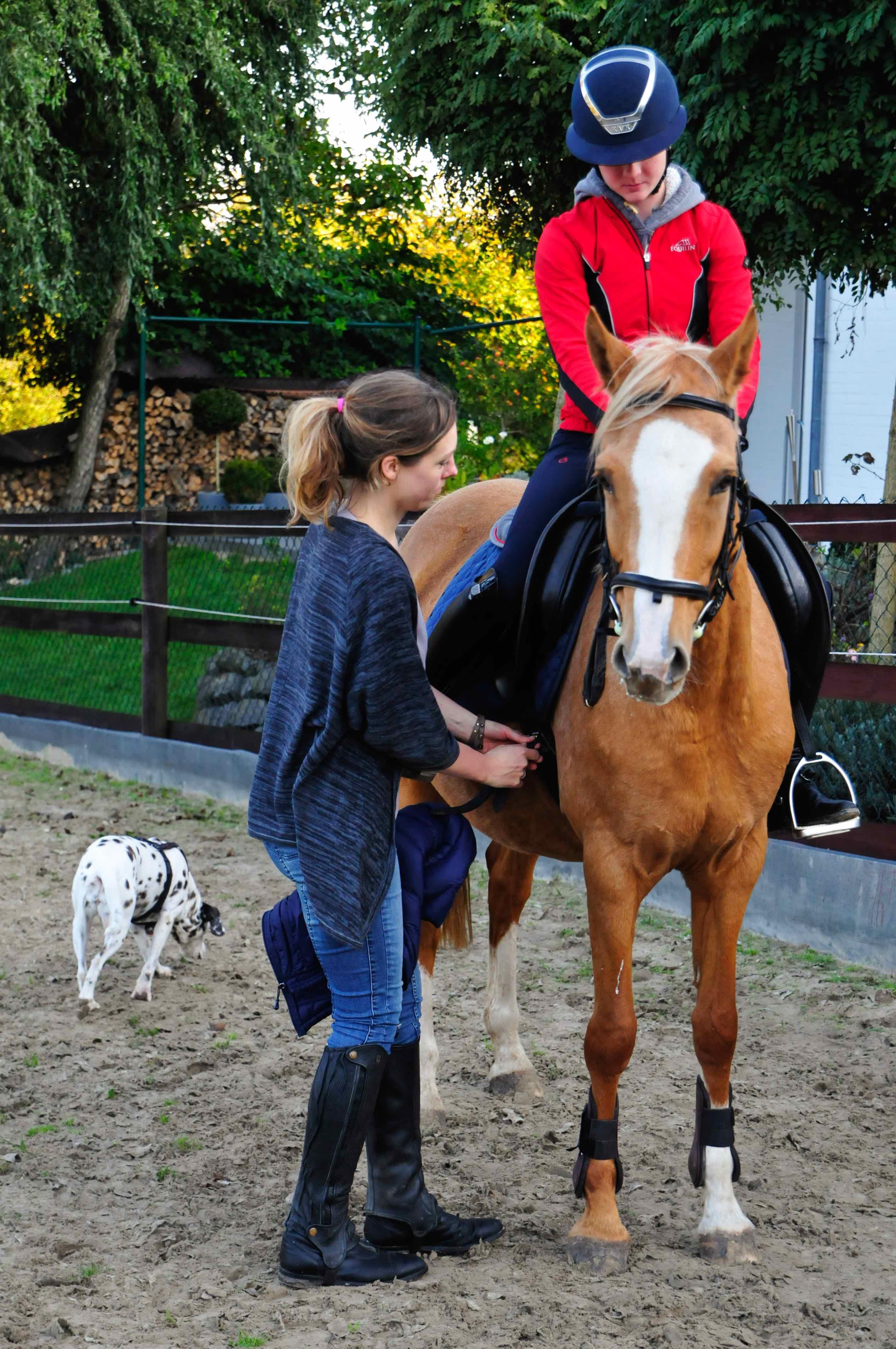 Pferd, Reiter, Nachgurten, Dalmatiner