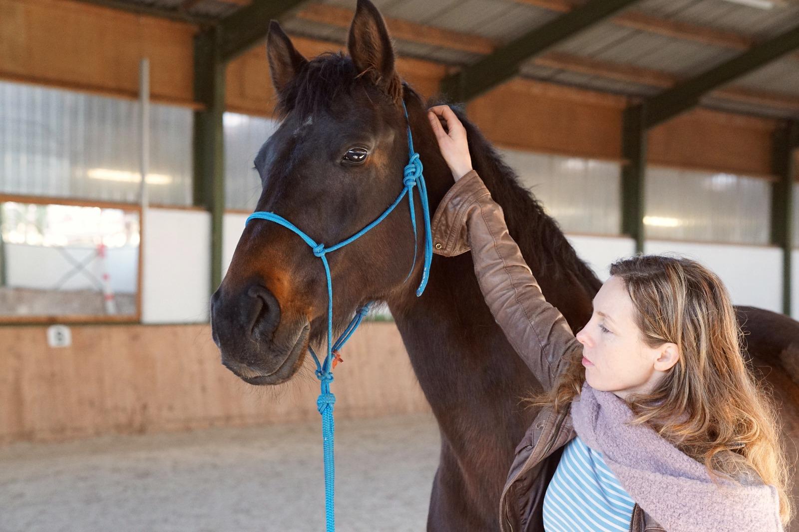 Pferd und Mensch nebeneinander