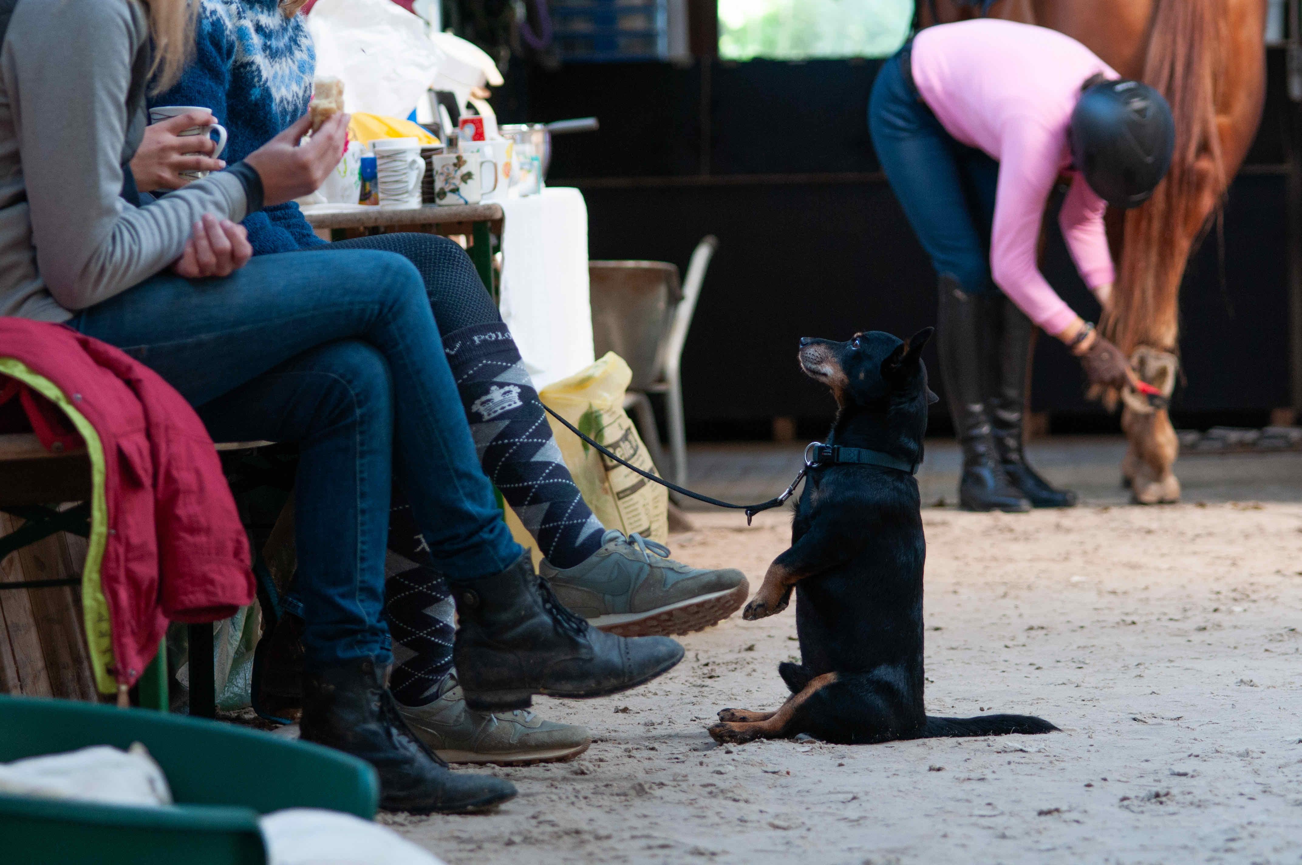 Zuschauer in der Reithalle und Hund