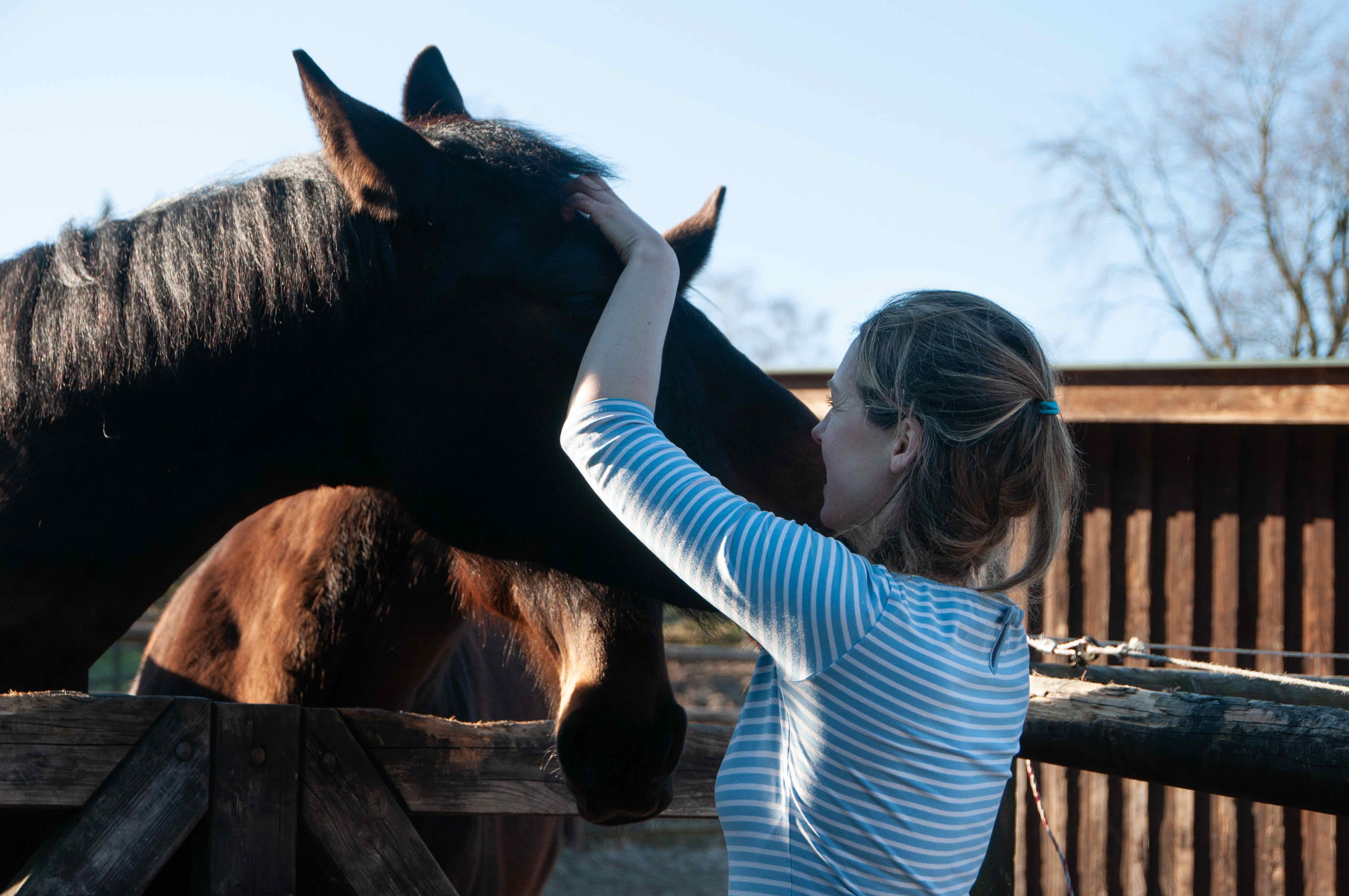Pferd streicheln