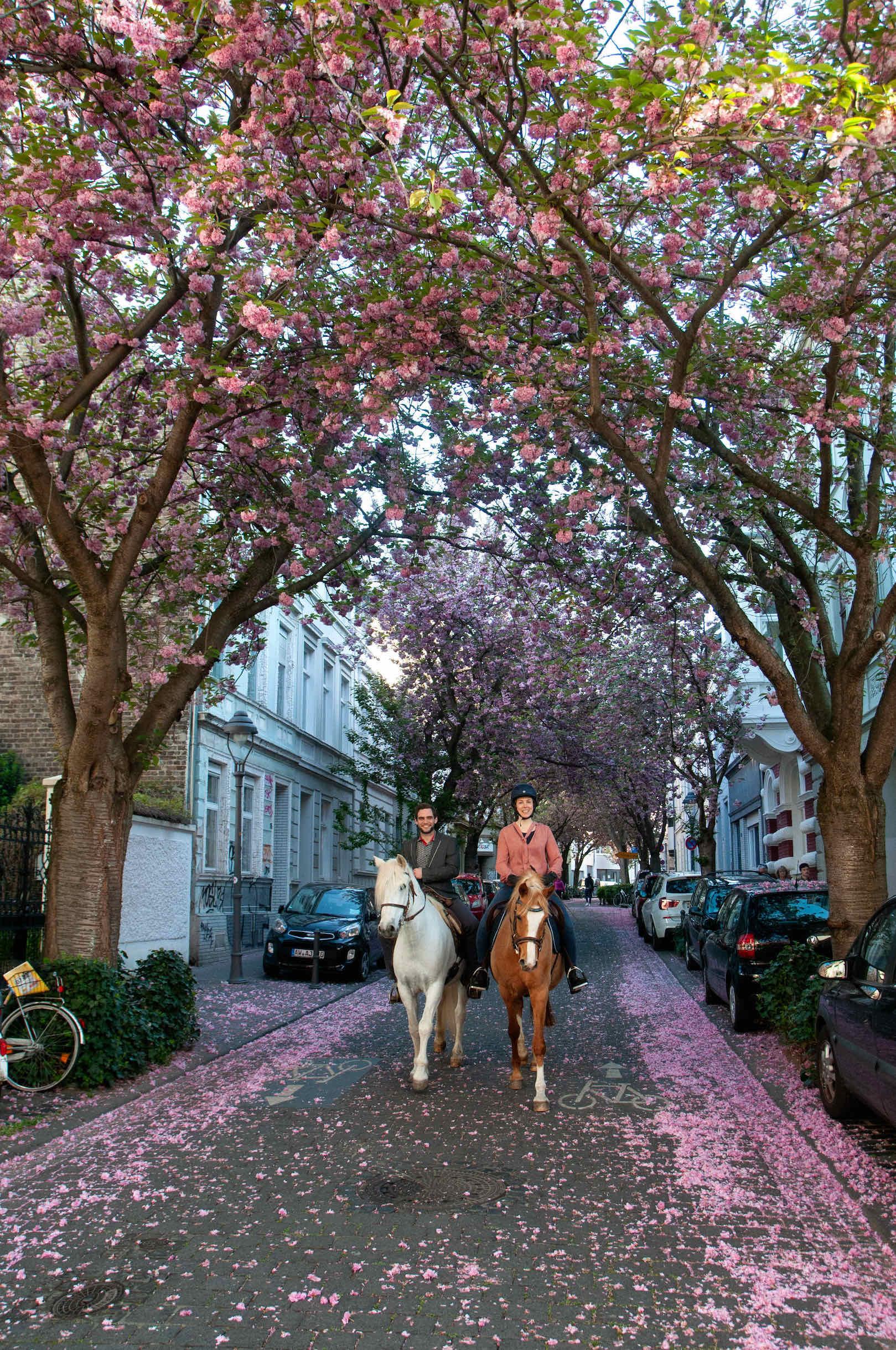 Zwei Reiter unter Kirschblütenbäumen