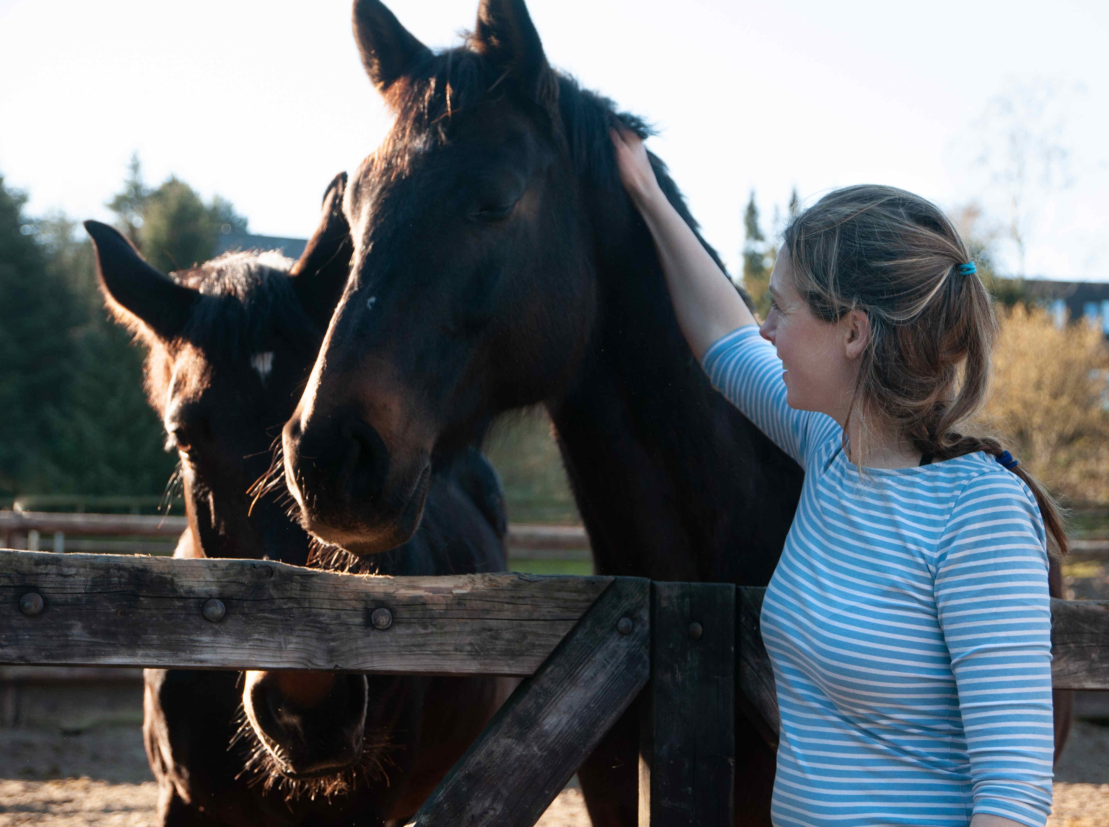 Zwei braune Pferde am Koppelzaun, Frau daneben streichelt ein Pferd.